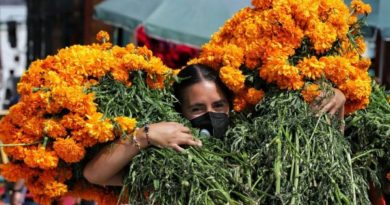 Day of the Dead: what is the origin and meaning of the cempasúchil flower, the queen of the altars in Mexico