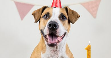 25 Dog Birthday Party Ideas: It's Paw-ty Time!   Shutterfly