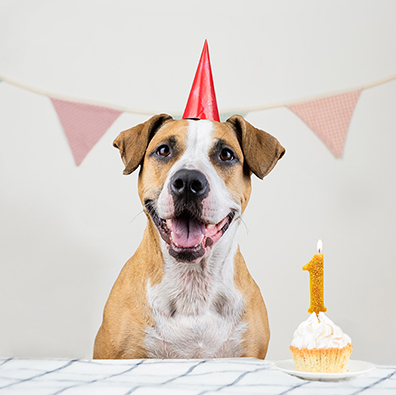 25 Dog Birthday Party Ideas: It's Paw-ty Time! | Shutterfly
